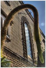 echoes ... (John FotoHouse) Tags: windows echoes malta sliema dolan carmelite 2013 taxbiex johnfotohouse canon7d
