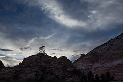 Lone Tree, Zion National Park