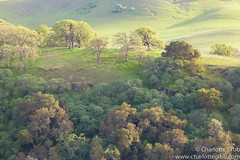 Mt. Diablo Late Light (Charlotte Hamilton Gibb) Tags: california trees light green hills mtdiablo stpatricksday oaktrees contracostacounty charlottegibbphotography