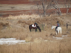 E and Silver, K and Mae returning (lostinfog) Tags: horse silver colorado mare mae e30 2012 riderka 201211 riderem