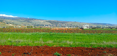 Deir el Ahmar Plain - Bekaa - Lebanon (Hanna Khoury) Tags: blue sky lebanon nature el bleu ciel paysage vigne ahmar liban landcape لبنان deir bekaa عنب سماء الاحمر دير سهل زرقاء الأحمر شعير بقاع