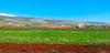 Deir el Ahmar fields- Bekaa - Lebanon (Hanna Khoury) Tags: blue sky lebanon nature el bleu ciel paysage vigne ahmar liban landcape لبنان deir bekaa عنب سماء الاحمر دير سهل زرقاء الأحمر شعير بقاع