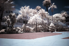 The Hotel Del Coronado (00595800) Tags: hotel del coronado san diego infrared ir nikon d80 hoya r72 palm trees