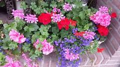 flowers (tonnynijs) Tags: flowers