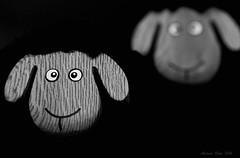 Irish woolie sheep (Marian Kloon (on and off)) Tags: irishwooliesheep shallowdepthoffield odc