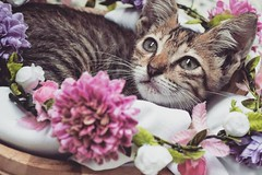 (Mari Villadiego) Tags: gato hembra gatita girl animal flores colores colombia love beautiful catmoments