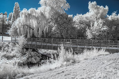 Ladywell Fields (blackwoodse6) Tags: park london uk england foilage trees white blue infrared ir 720nm londonparks lewisham southlondon southeastlondon nikond300 bluesky falsecolour outdoor ladywellparks