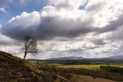 Standing Alone (Gary Ellis Photography) Tags: balmaha scotland summer uk westdunbartonshire afternoon beautiful beauty colorimage colorful colourimage colourful daytime digital environmental exterior field frontview gorgeous hill holidays hot lake landscape landscapephotography liquid loch naturephotography outdoors outside park path recreation sunshine trail unitedkingdom warm water wet