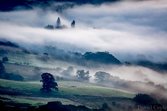 Misty Trees (Explored 07/09/16) (Daniel Coyle) Tags: mistytrees mist mistymorning lake ullswater lakeullswater lakedistrict cumbria dawn field countryside fields trees fog danielcoyle nikon nikond7100 d7100 uk england