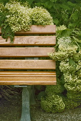 Happy tired-hydrangea-bench Monday! HBM (suzanne~) Tags: bench monday hortensie hydrangea munich bavaria germany outdoor plant flower