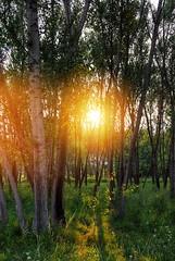 Sunset (Sareni) Tags: sareni serbia srbija vojvodina banat juznibanat seleus tree drvo drvece woods suma branche granje grass trava light svetlost colors boje hdr highdynamicrange evening vece sun sunce zalazak sunset shadows senke zbun zbunje summer leto august 2016 twop