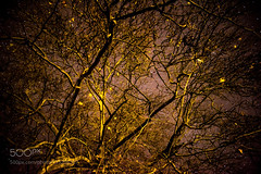 Night Magic (tycampbe) Tags: ifttt 500px yellow sky beauty nature night tree abstract beautiful brown natural pattern branches stars black magic darkness space astro photography world photograph astral pics czech photographer france theknoxphoto knox