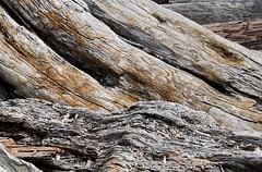 Decay (David Badke) Tags: oakbay bc seashore driftwood
