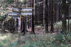 Von Willingen nach Usseln (dieter.steffmann) Tags: rothaargebirge hochsauerland upland willingen rothaarsteig neuerhagen winterberg niedersfeld