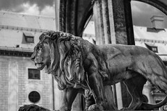 Lion`s Club (*Capture the Moment*) Tags: 2016 bokeh dof feldherrnhalle fotowalk lion lwe munich mnchen sonya7ii zeissbatis1885 monochrome schwarzweiss