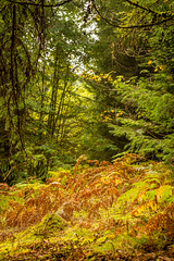another unexpected clearing (grahamrobb888) Tags: birnamwood autumn colours d800 nikkor50mmf18 perthshire scotland forest trees
