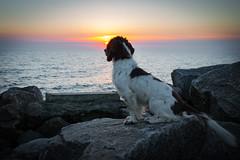 View to sunset (Flemming Andersen) Tags: animal bornholm outdoor seaside dogs hund outlook sunset water hasle capitalregionofdenmark denmark dk