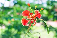 Flor (megalia2) Tags: florzinha flor natureza delicada cute fofa linda