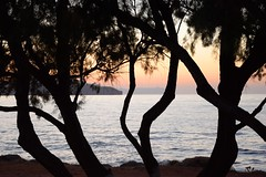 Mediterranean sunset (JoannaRB2009) Tags: mediterranean chania hania canea xania crete kriti kreta greece grecja trees sea water evening sunset silhouettes summer landscape nature katodaratsos