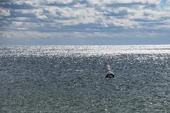 All is Calm (WilliamND4) Tags: ocean sea coast nikon nikond750 water buoy clouds sky buoyant