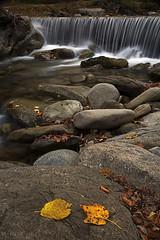 Si sta come d'autunno sugli alberi le foglie 01 (Promix The One) Tags: foglie giallo movimento sassi acqua autunno marche cascata torrente canoneos1dsmarkii polarizzatore filtrond canonef28135f3556isusm tempilenti acquasantatermeap