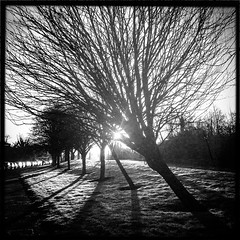 Early Morning Frost (soilse) Tags: morning trees ireland shadow blackandwhite dublin sun cars monochrome grass sunshine morninglight frost shadows branches silhouettes squareformat lensflare footpath frostymorning phonephoto iphone stronglight barebranches brightsunshine 2013 branchpattern irinn iphonephoto iphonecamera iphoneapp stillorganroad hipstamatic iphoneogrphy