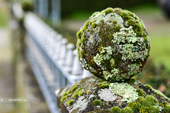 Lichens Orb [Explored] (samuel.rolo) Tags: light portugal beautiful beauty metal stone self fence garden lens photography 50mm prime photo moss blurry nikon foto photographer little photos bokeh small orb explore planet lichen fotografia nikkor 18 50 samuel lichens 50mm18 viseu taught nikon5018 explored 2013 nikon50mm nikon18 d5100 nikond5100