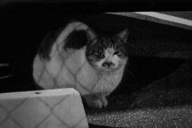Today's Cat@2013-01-16