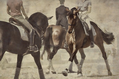 Warming Up (melepix) Tags: show horses horse texture three competition dressage flypaper memoriesbook