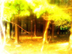 Remenham (Beyonder) Tags: shadow blur tree saturation bloom fade lomoish boost warmify soften holgaish ortonish