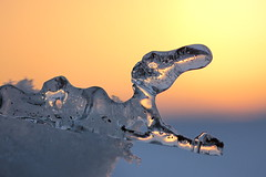 Wuff, wuff (Cornelia G.Becker (soulll59)) Tags: light sunset sky sunlight macro ice nature germany deutschland gold licht flickr sonnenuntergang hessen eveningsun details natur fine himmel makro eis abendsonne bensheim grosaufnahme soulll59 mygearandme corneliagbecker
