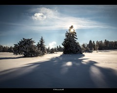 Corona (bernd obervossbeck) Tags: schnee trees winter light shadow snow tree backlight landscape licht landschaft bume schatten baum gegenlicht sauerland landscapephotography hochsauerland landschaftsfotografie mygearandme hochheideniedersfeld