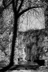 Duke Farms Princeton NJ II (Daniel Hard) Tags: camera usa art lens other newjersey year places sculptures m9 2013 28f28 dukefarms 012013