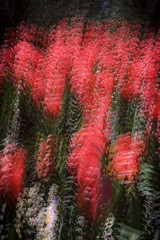 20071007_EOS5 multiple exposure (johnstewartnz) Tags: flower red movement multipleexposure icm intentionalcameramovement canon eos5 canoneos5 film slide scan epson v700 epsonv700 100canon unlimitedphotos
