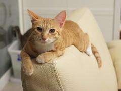 Camera Roll-267 (lazybonessss) Tags: leica cat momo kitten nana kitten2 summicronm35 sonynex3