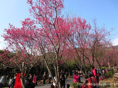 北投賞櫻-IMG_8402