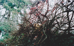 Up in the Tree (maria.rotariu) Tags: tree oregon bag portland branches nikonfm fujifilm800 nikon1850mm