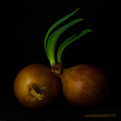 Onions (oomphoto) Tags: macro blackbackground onions onionskin newshoots sproutingonion dsc86685 dsc86682 bestevercompetitiongroup bestevergoldenartists onionshoot