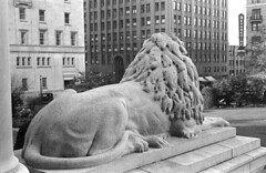 [The rear of a lion beside the courthouse steps]