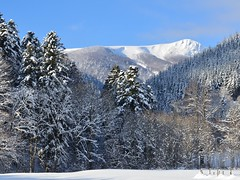 Le Rothenbachkopf (alt : 1318m ) (Philippe Haumesser Photographies) Tags: winter snow france mountains nature landscapes hiver alsace neige forests paysages vosges elsass montagnes mittlach forts rothenbachkopf nikond7000 rememberthatmomentlevel1 rememberthatmomentlevel2