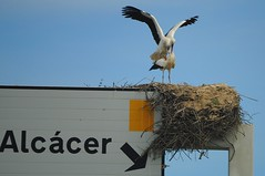 Spring in the air (beyondhue) Tags: road male portugal sign female high highway nest mating stick algarve mate stork beyondhue