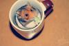 ‹(˟̮˟)› (Saad AL shuhrl ♥ | سعد الشهري) Tags: flickr saad الله عربي بس السرعه عبد بنت الخليج دبي سعد صوره الامارات تصوير الوان مول الرياض ولد المملكه حيوان سعودي فلكر مصوره سعوديه بورتريه مسلم اسود قطه العربي همستر كام نيكون السعوديه كانون العربيه ابيض الشهري مصور فوتو فوتوشوب مباني انجليزي جده قروب تجريد مكرو همتارو سوني مايكرو معدل عدسه محترف تعديل كامره لايت نايكون حيونات سيجما مثبت احترافي يوتيوب روم فائق فوتغرافي تويتر بتري يانسونك همترو