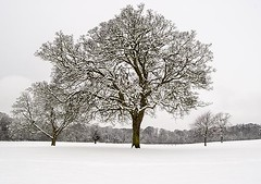 Tranquil Winter Scene - Camperdown Park - Dundee Scotland (Magdalen Green Photography) Tags: snow scotland pretty dundee freezing tayside wintertrees camperdownpark scottishwinter calmnaturescene iaingordon magdalengreenphotography tranquilwinterscene