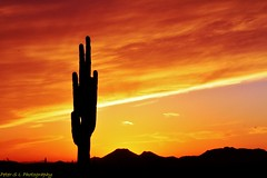 Phoenix Sunset 2 (Photography Peter101) Tags: sunset arizona cactus nature sunrise canon
