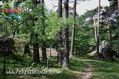 Caminando por los Pinares (Historia de Covaleda) Tags: espaa spain fiesta paisaje douro pinos soria historia pinar tradicion duero covaleda