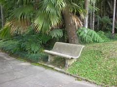 Jardim Botnico de So Paulo. (Elias Rovielo) Tags: fall bench sopaulo banco sp jardimbotnico outono jardimbotnicodesopaulo