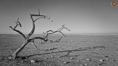 Leica X2 (RASHID ALKUBAISI) Tags: leica rashid  x2       leicax2 wwwrashidalkubaisicom inforashidalkubaisicom rashidalkubaisi