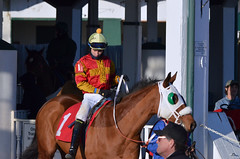 2013-02-21 (117) r9 Xavier Perez on #1 Nighcut (JLeeFleenor) Tags: horses caballo cheval photography photos uma cal jockey jinete cavallo cavalo pferd equestrian kuda alogo equine hest thoroughbreds soos hevonen cuddy paard cavall kon koin laurelpark  jokey fantino hst ceffyl  jquei  ko faras hestur  perd ngi  konj    capall beygir yarraman dokej rennreiter  pfeerd   okej kilparatsastaja jocheu
