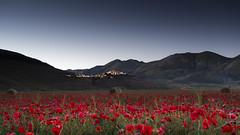 Red carpet (Galep Iccar) Tags: castelluccio umbria red landscape landscapes paesaggi paesaggio rosso
