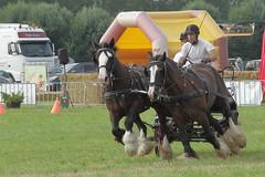 IMG_7661 (Snapshot(wo)man) Tags: rockanje powerhorse trekpaarden